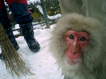 snow monkey0210.png